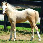 2014 filly, owned by Cameron Oaks Farm, AL